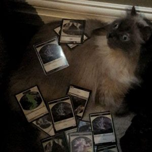 Spirit the Cat covered in spirit tokens